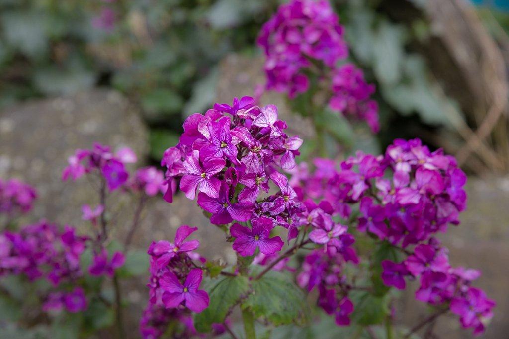 06 Wildflowers