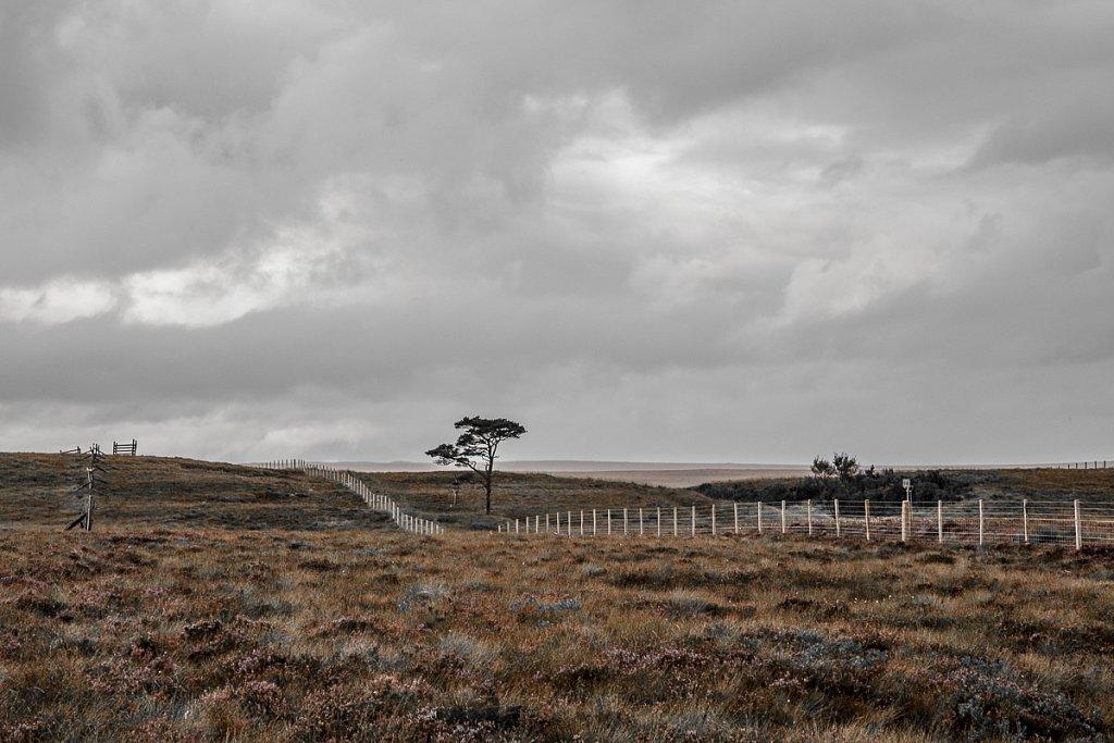 Forsinard Landscape